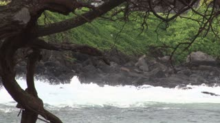 Pacific Ocean Waves Crashing on Hawaii Rocks