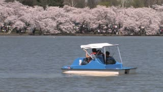 Paddle Boats in the Tidal Basin