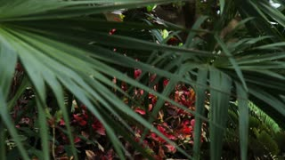 Palm Fronds And Red Flowers