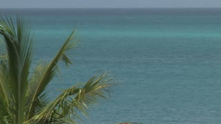 Palm Leaves and Ocean on Turks and Caicos Island 2