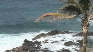 Palm Tree and Ocean View 3