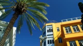 Palm Tree And Yellow Building