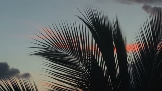 Palm Tree Leaves Stretch To Sky