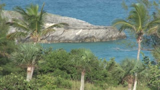 Palm Trees and Large Rock in the Water in Bermuda
