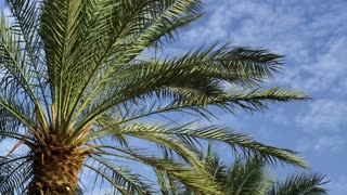 Palm Trees In Breeze 6