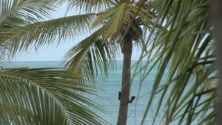 Palm Trees with Ocean Background 3