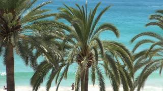 Palm Trees with Ocean Background