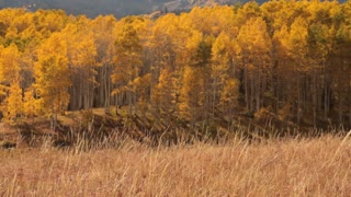 Pan Across Mountain Meadow With Yellow Aspens And Indian Tepee