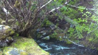 Pan Across Shrubs to Base of Waterfall