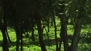 Pan Of Green Forested Area