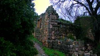 Pan Of Tree In Ruins
