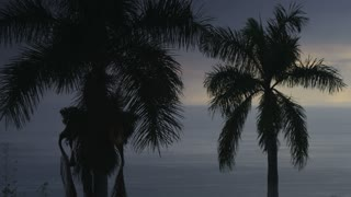 Panning From Palm Trees to Ocean Horizon at Sunset