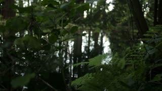 panning swampy water 1