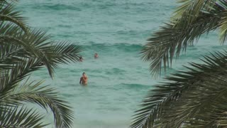 People Swimming in Ocean with Palm Leaves