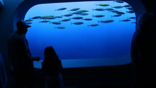 People Watch Fish In Aquarium