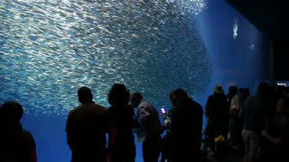 People Watch Fish In The Aquarium