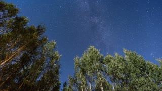 Perseid Meteor Shower Pan Up Aspen Trees Into Milky Way
