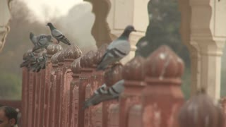 Pigeons on Gate at Amer Fort