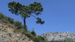 Pine Tree And Rocks