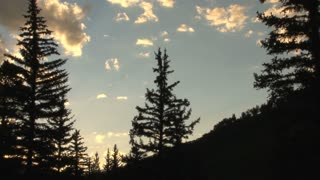Pine Trees Sunset Silhouette 2