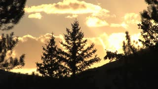 Pine Trees Sunset Silhouette 4