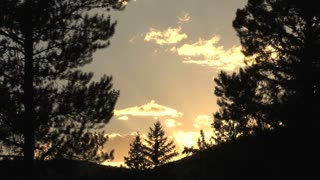 Pine Trees Sunset Silhouette 5