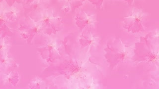 Pink blossoms background loop animation