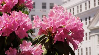 Pink Flowers By Luxury Resort Entrance