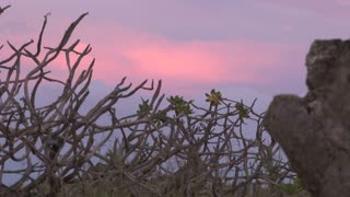 Pink Sunset through Branches