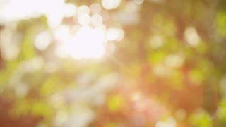 Plant Life Sun Wash