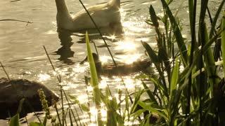 Pond Sparkle 2