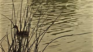 Pond Sparkle 3