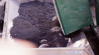 Pouring Grapes Into Processor