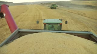 Pov Of Tractor Hauling Wheat