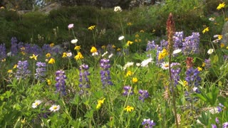 Pretty Hilltop Flowers