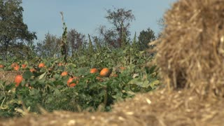 Pumpkin Patch and Bale of Hay Out of Focus