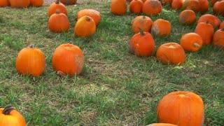 Pumpkins On Grass