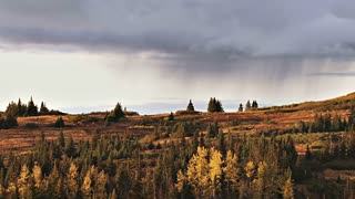 Rain Falls In Distance Of Sparse Forest