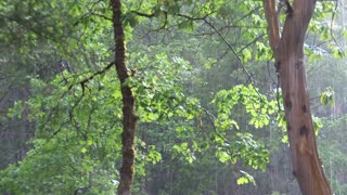 Rain in Sunlit Forest