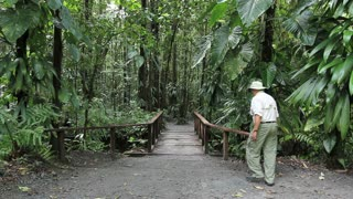 rainforest man walks