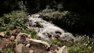 Rapid Stream Flowing Through Brush and Rocks