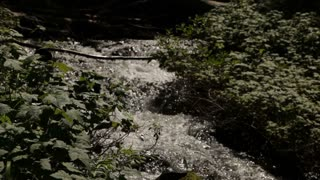 Rapid Stream Flowing Through Foliage