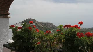 Red Flowers And Countryside 3