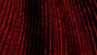 Red Wake