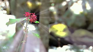 Red Wildflower Against Rushing Sunny Creek in Forest
