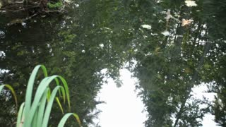 Reflection of trees in  water 2