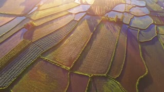 Rice fields on terraced in surice, China. Aerial view