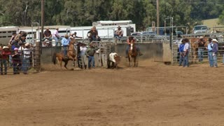 Riders In Rodeo Chasing After Calf