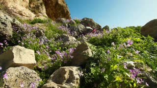 Rocks, Flowers and Vegetation Near Cave Entrance