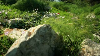 Rocks, Grass, Wildflowers, and Shrubs 2